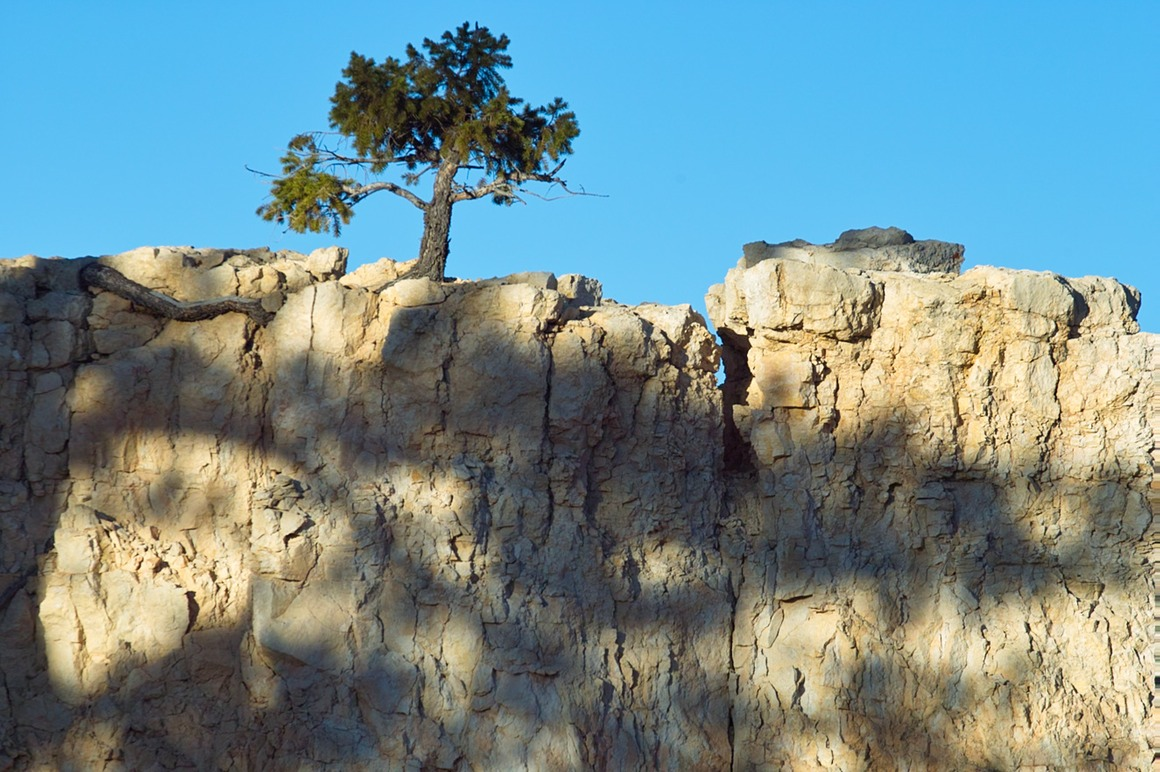 0516-tree-on-cliff